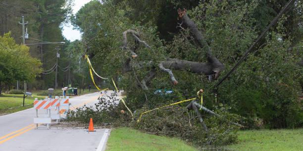 Baum über Stromleitungen, die durch Hurrikan Florence herausgenommen wurden – Foto
