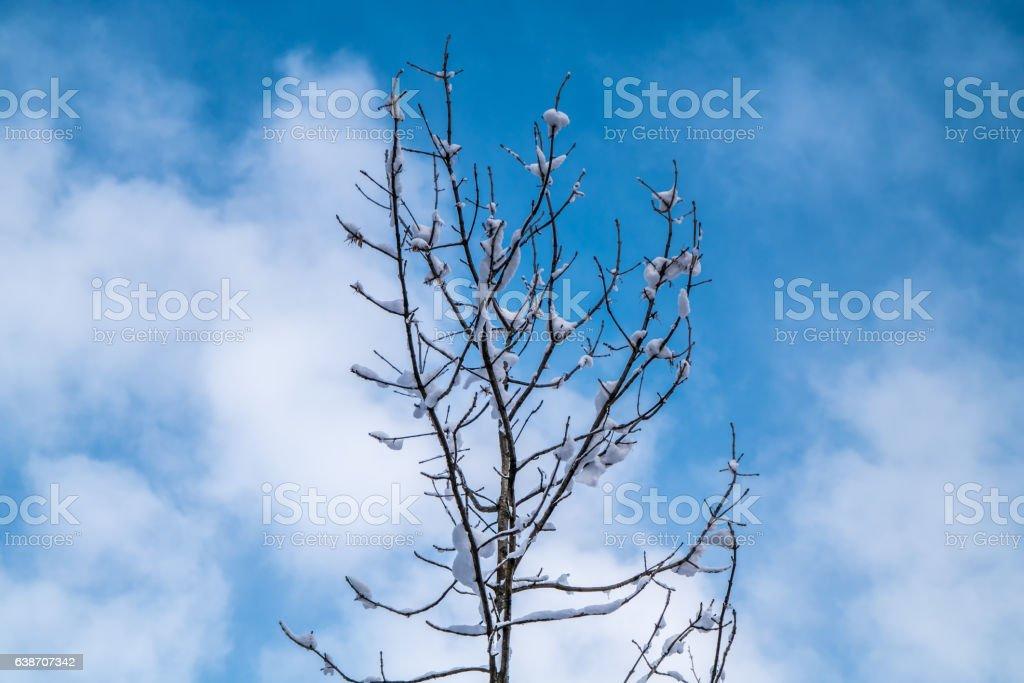 Baum gegen blauen Himmel  – Foto