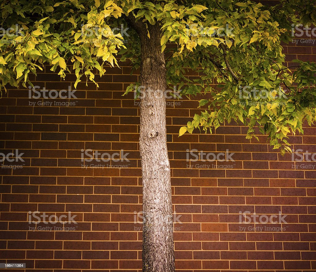 Tree against brick wall stock photo