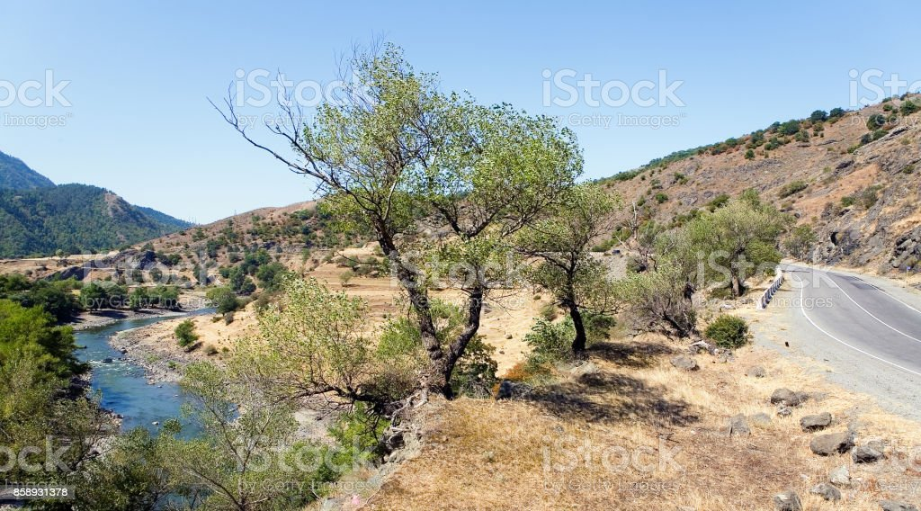 A tree against the background of the river Kura. stock photo