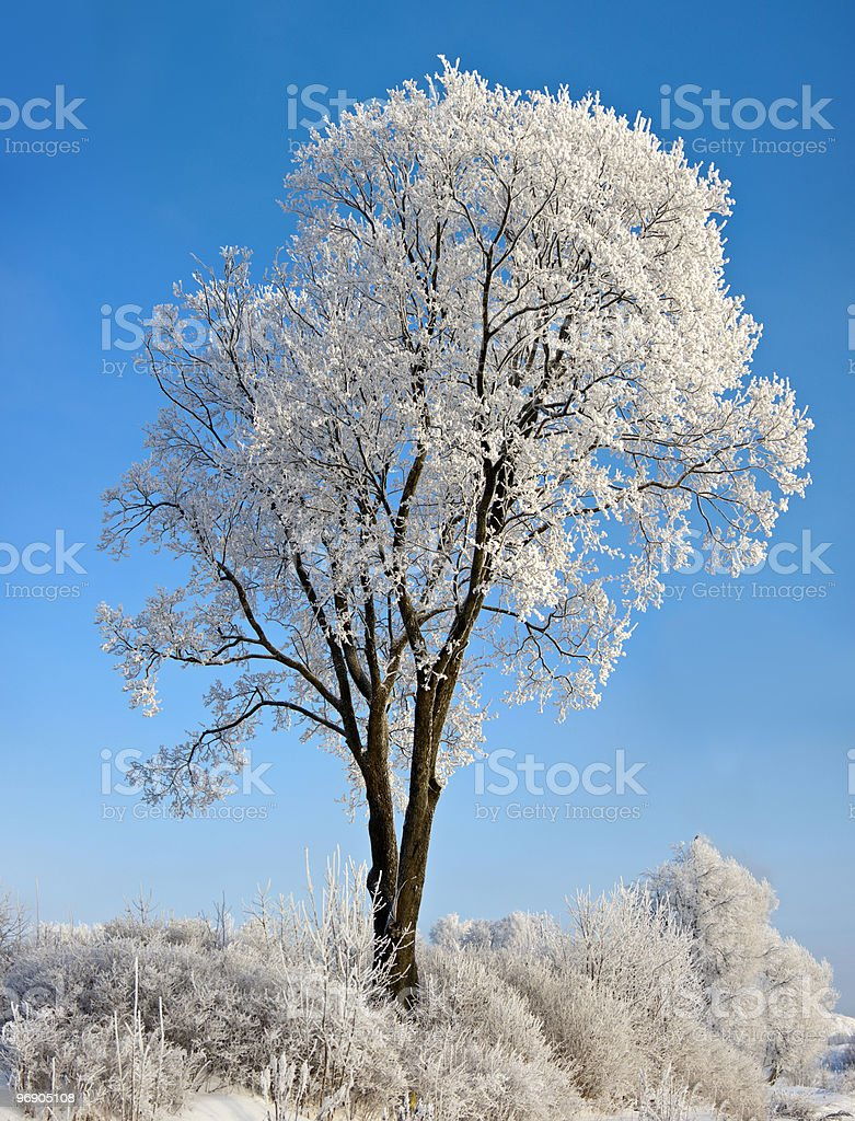 Tree against the blue sky royalty-free stock photo