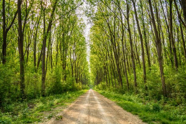 Allée de l'arbre au printemps - Photo
