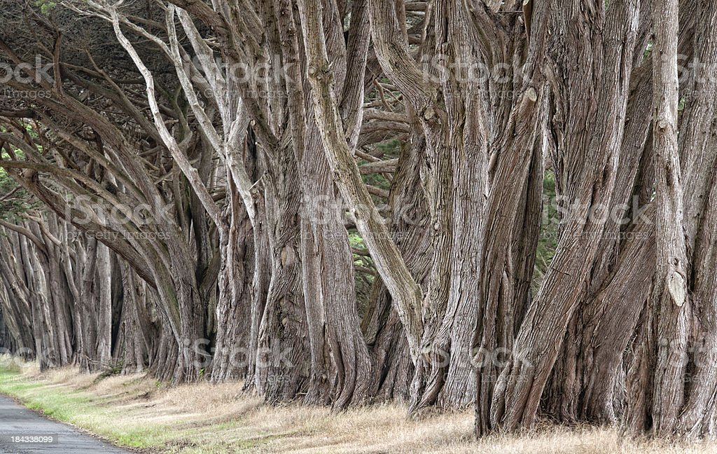 Tree Alley Background royalty-free stock photo