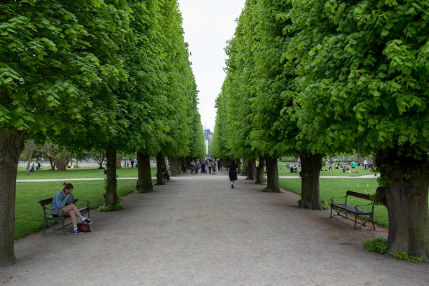 Tree alley in King's Garden in Copenhagen stock photo