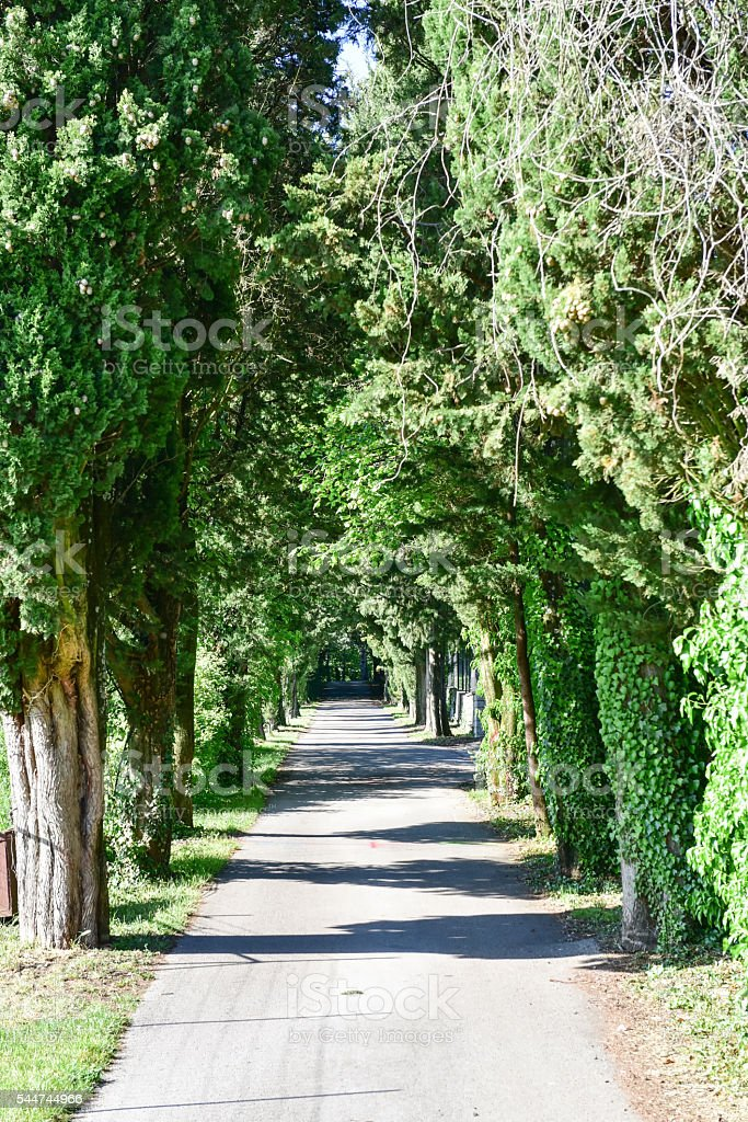 Tree Alley stock photo