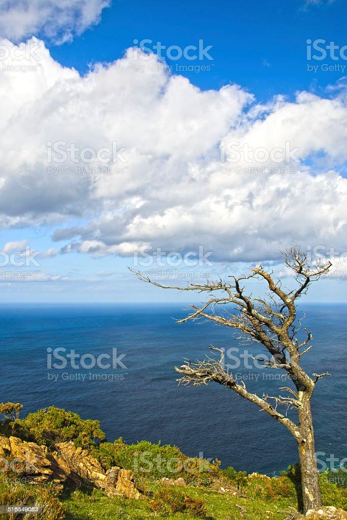 tree alone at the coast stock photo