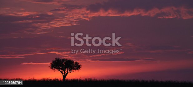 tree alone in africa