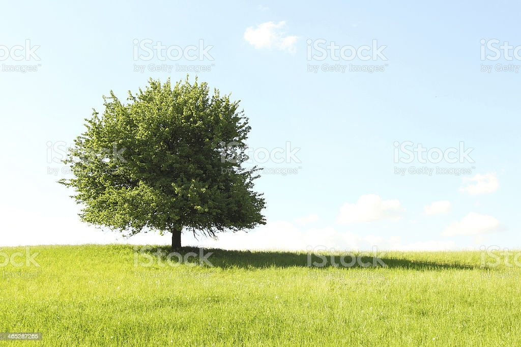 Tree alone in the middle of a green field stock photo