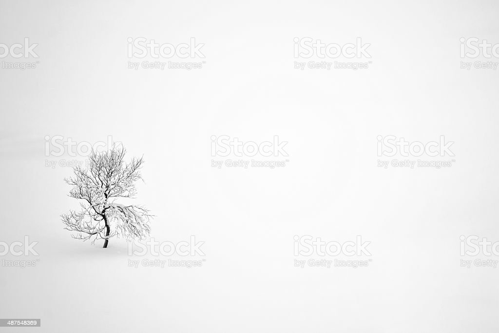 Tree alone in the snow royalty-free stock photo