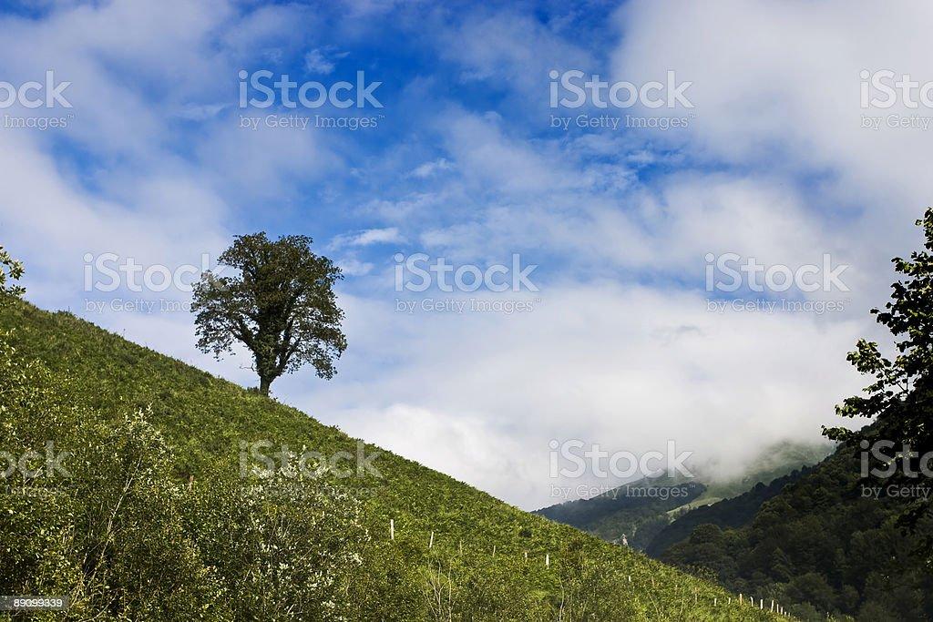Árbol solo foto de stock libre de derechos