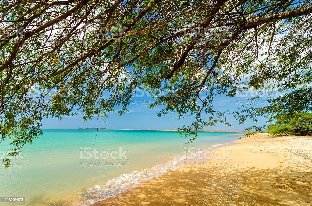 Tree and Beach stock photo