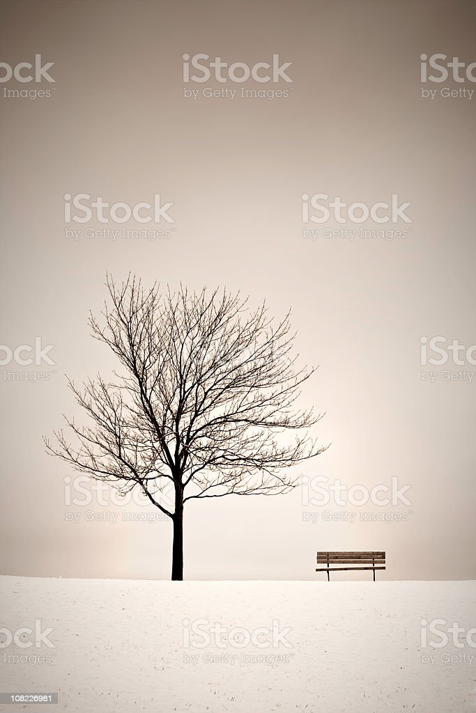 Tree and Bench in the Winter royalty-free stock photo