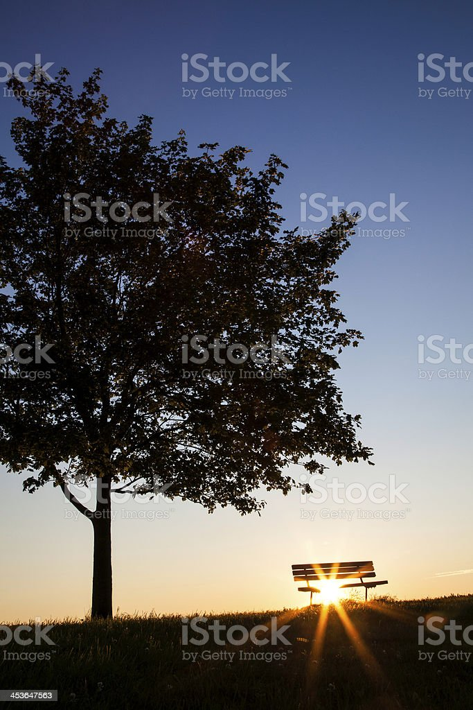 Tree and Bench royalty-free stock photo