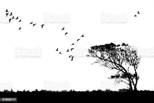 Tree and birds silhouette picture id528868741?b=1&k=6&m=528868741&s=612x612&h=g2jibqjz5adfdlcxz2r8jz1keurfcmbx4qzfgh9x4o8=