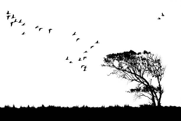 Tree and birds silhouette stock photo