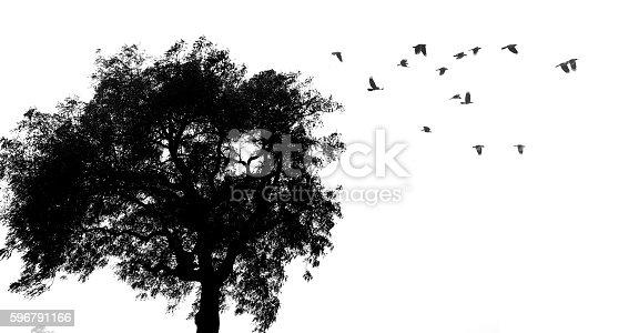 istock Tree and birds silhouette 596791166