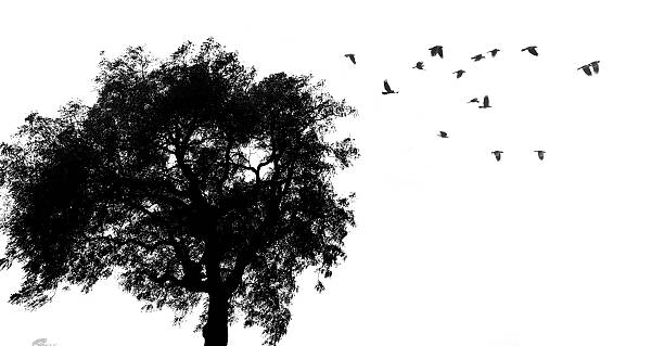 Tree and birds silhouette picture id596791166?b=1&k=6&m=596791166&s=612x612&w=0&h= ibu162lyuemikbbrmx6f4jmfbgrlwykln 5oytkeba=