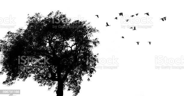Photo of Tree and birds silhouette