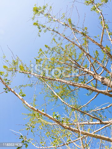 519188550istockphoto Tree and blue sky 1183531825