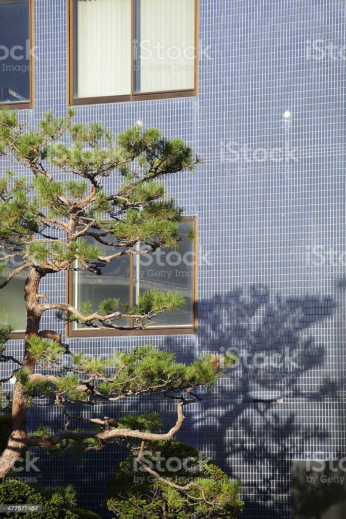 tree and blue wall royalty-free stock photo