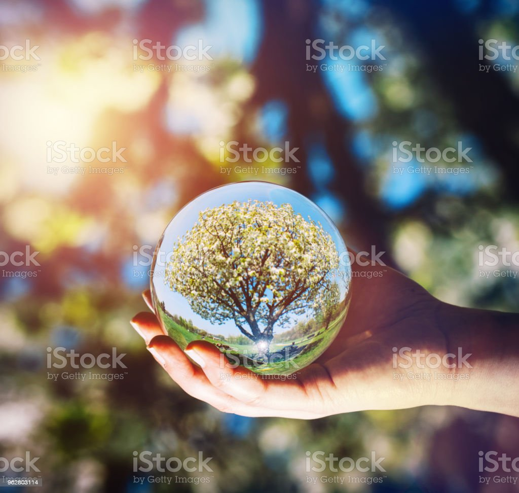 A tree and bright blue sky reflecting in a glass sphere held by a...