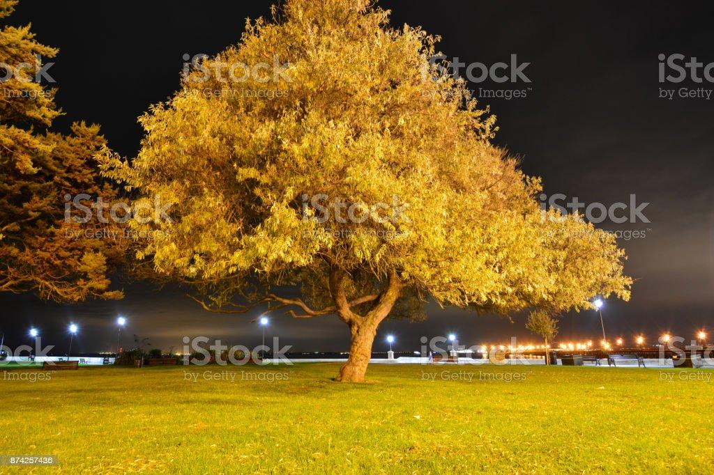 Tree and City Skyline at Night stock photo