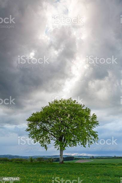 Photo of Tree And Clouds I
