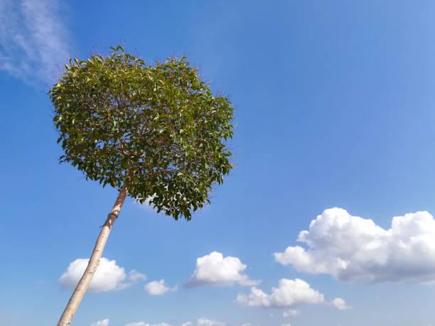 El árbol y las nubes, en el cielo azul. - foto de stock