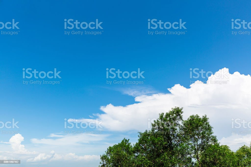 tree and cloudscape – Foto