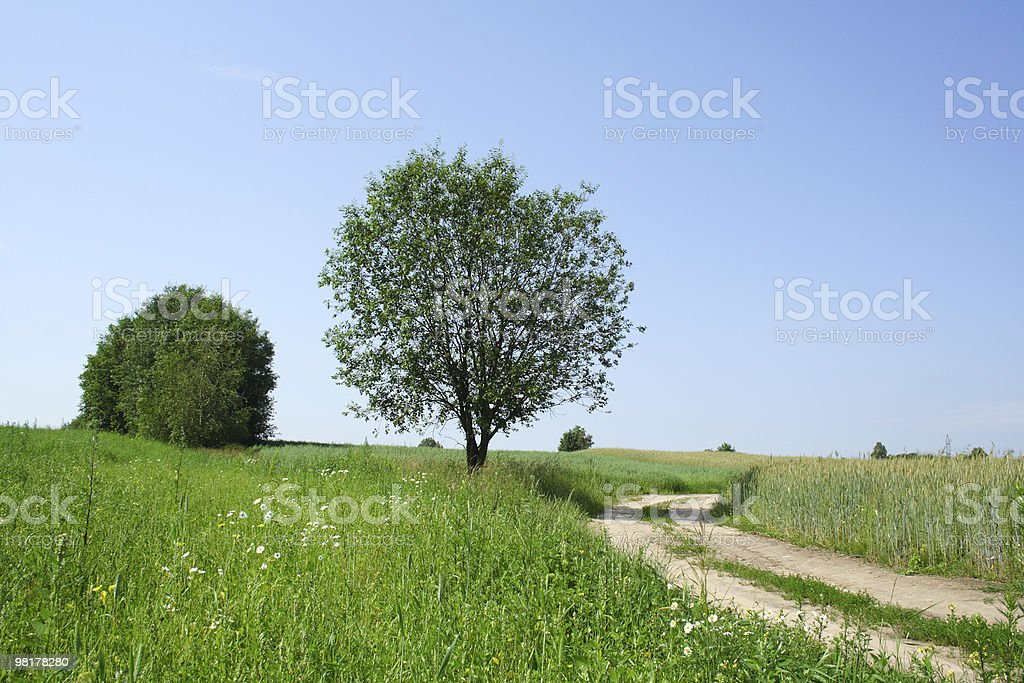 Tree and Country Road royalty-free stock photo