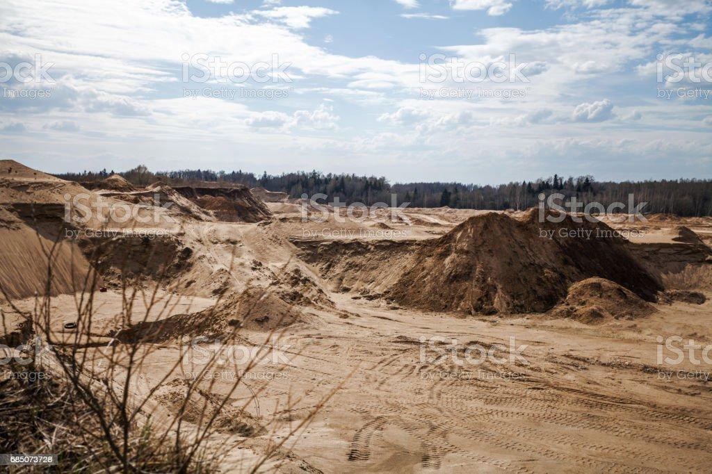 árboles y plantas secas en el desierto foto de stock libre de derechos