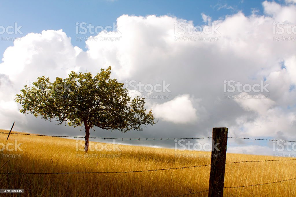 Tree and Fence Post in a Yellow Field of Grass stock photo