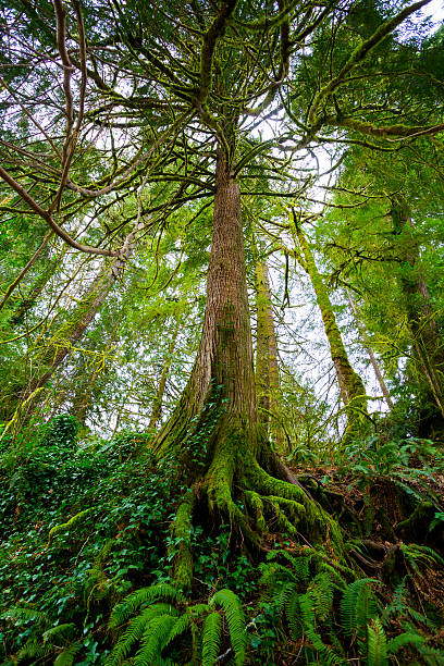 Tree and Ferns in Forest stock photo