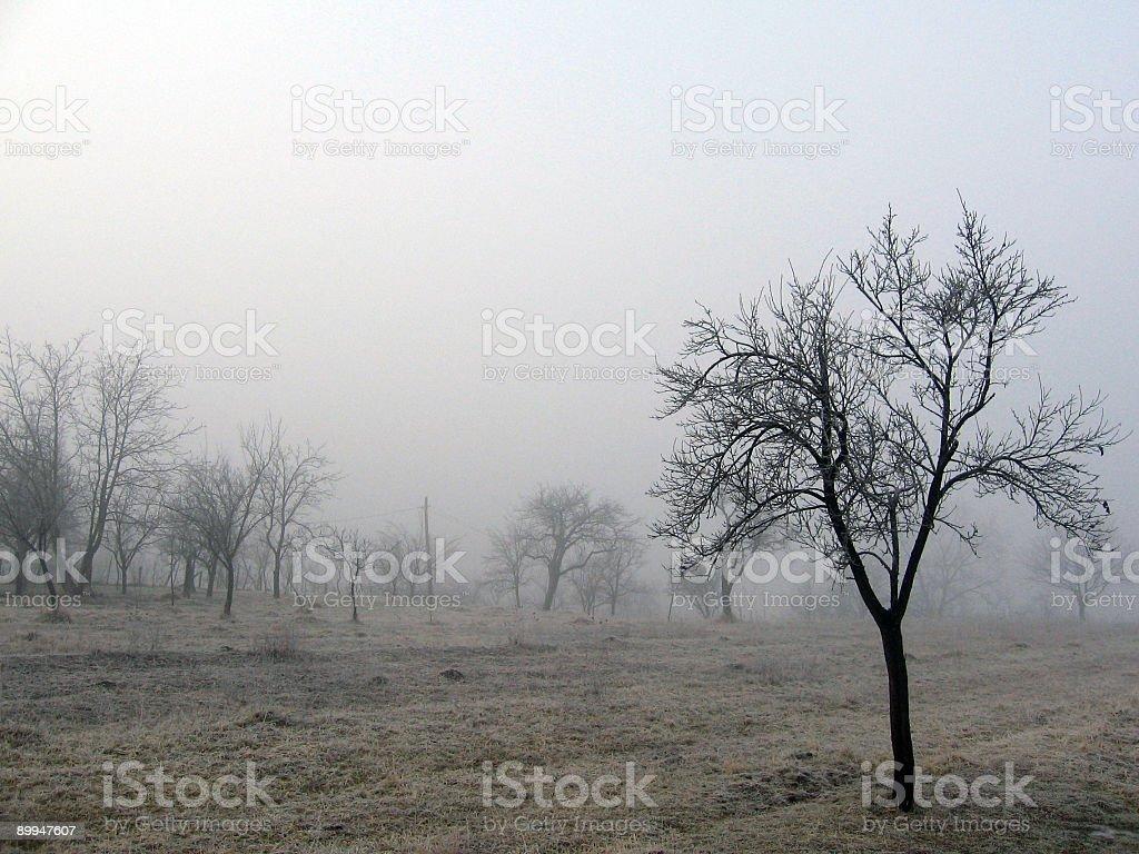 Tree and fog royalty-free stock photo