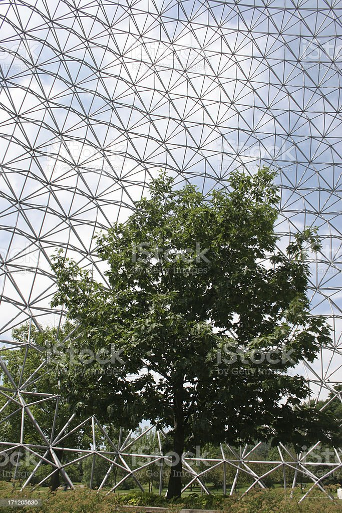 Tree and geodesic structure royalty-free stock photo