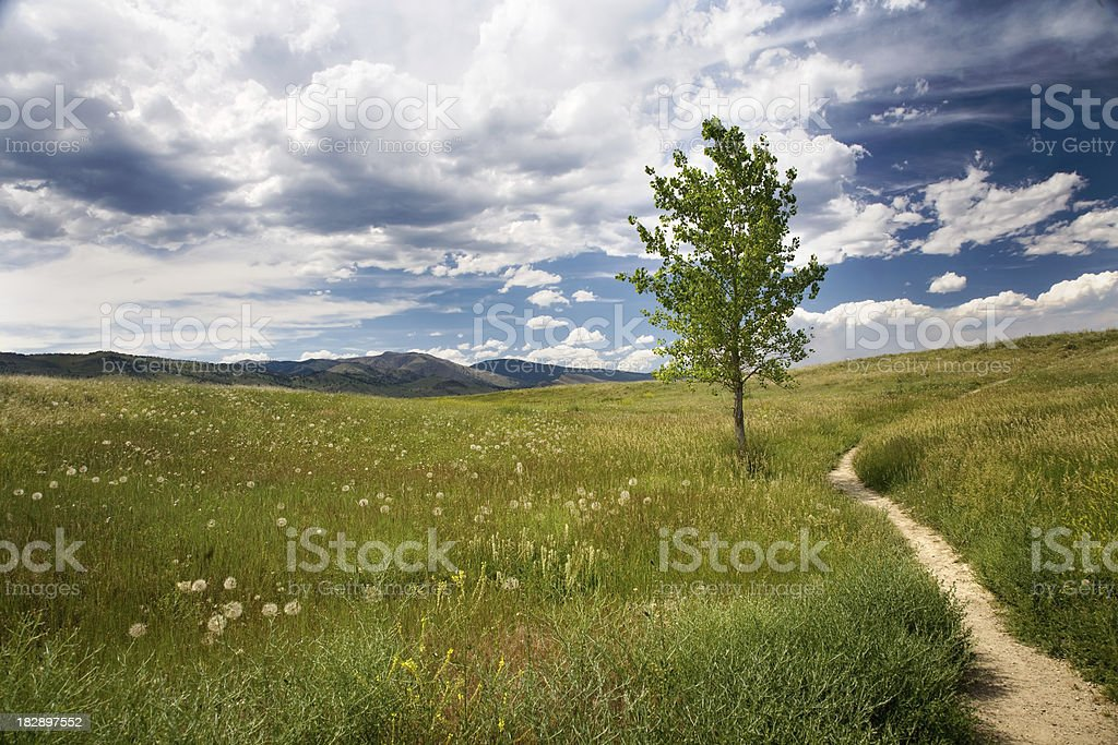 Tree and hiking path on grassy area royalty-free stock photo