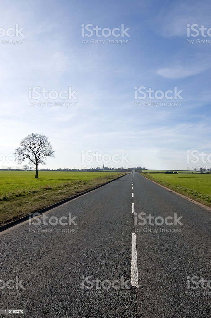 Tree and long road stock photo