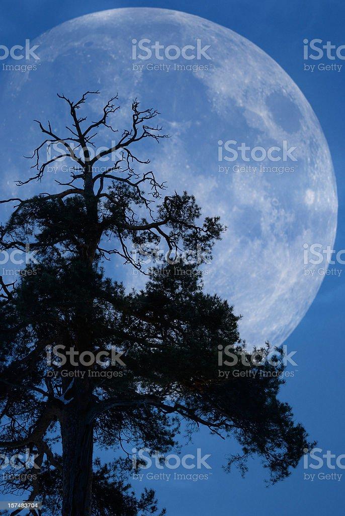 Tree and moon stock photo