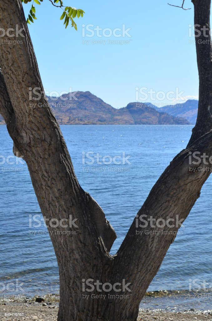 Tree and mountains stock photo
