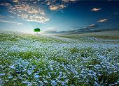 ツリーと茨城県で青い空と春のひたち海浜公園でネモフィラ