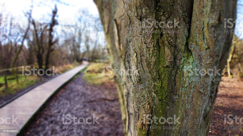 Tree and path stock photo