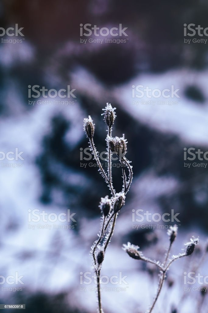 Tree and plant covered by ice and snow needles during winter. photo libre de droits
