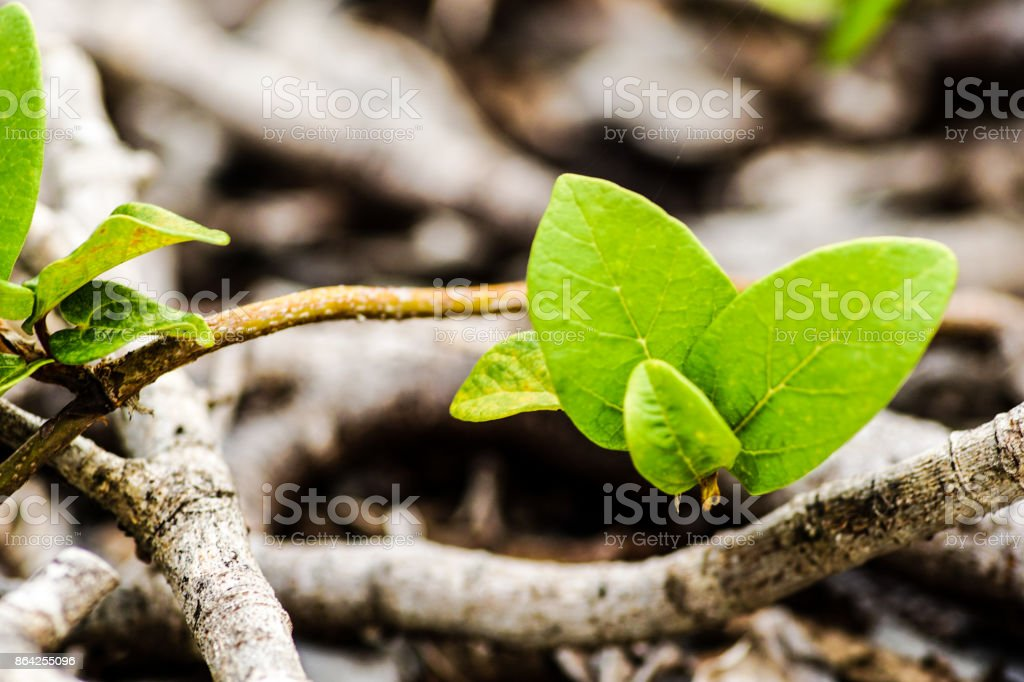 Tree and Plant royalty-free stock photo