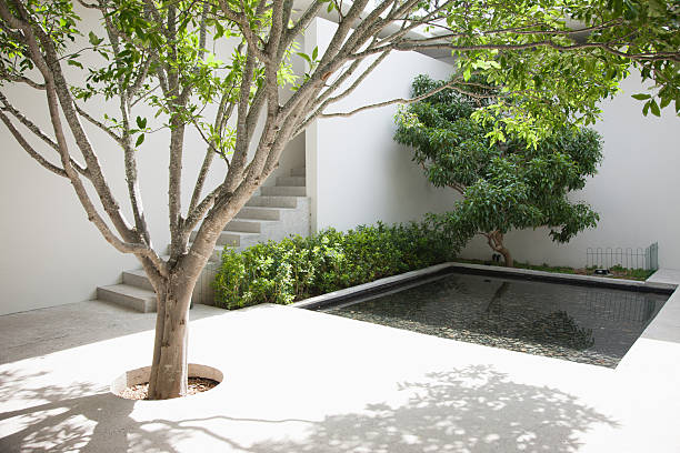 Tree and pool in courtyard  courtyard stock pictures, royalty-free photos & images
