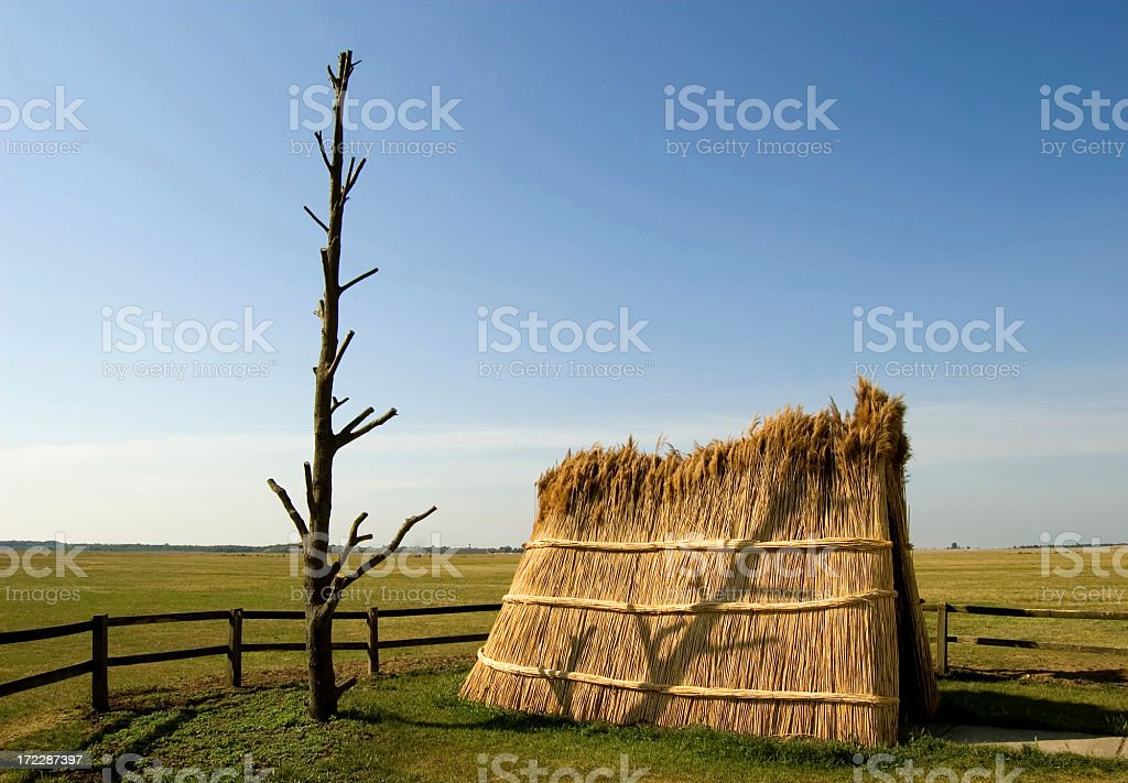 Tree and reed royalty-free stock photo