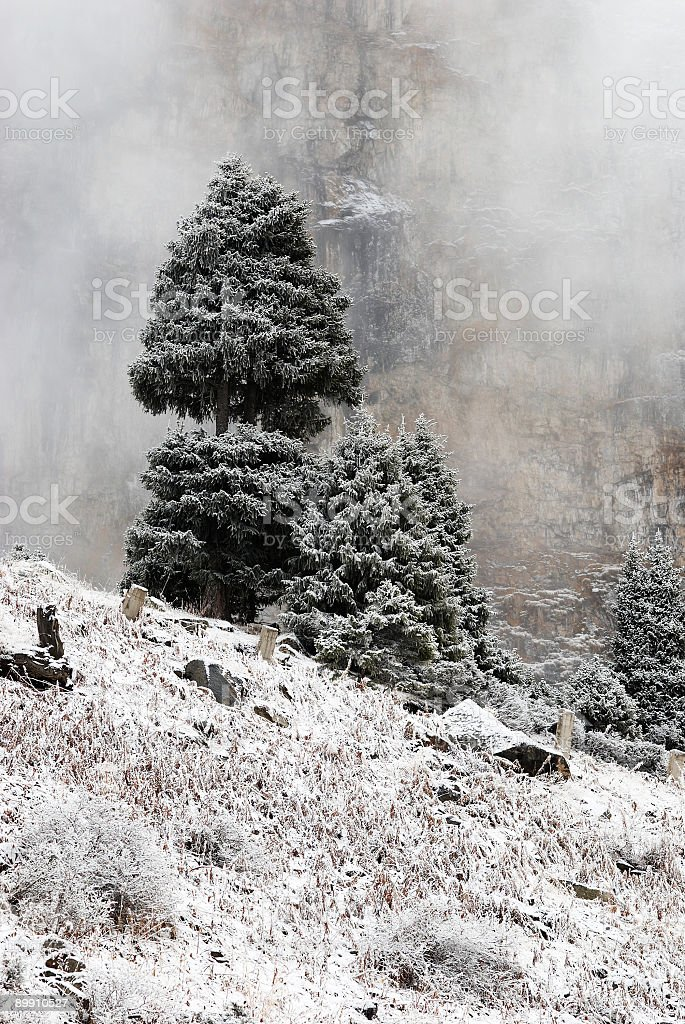 Tree and rock in fog royalty-free stock photo