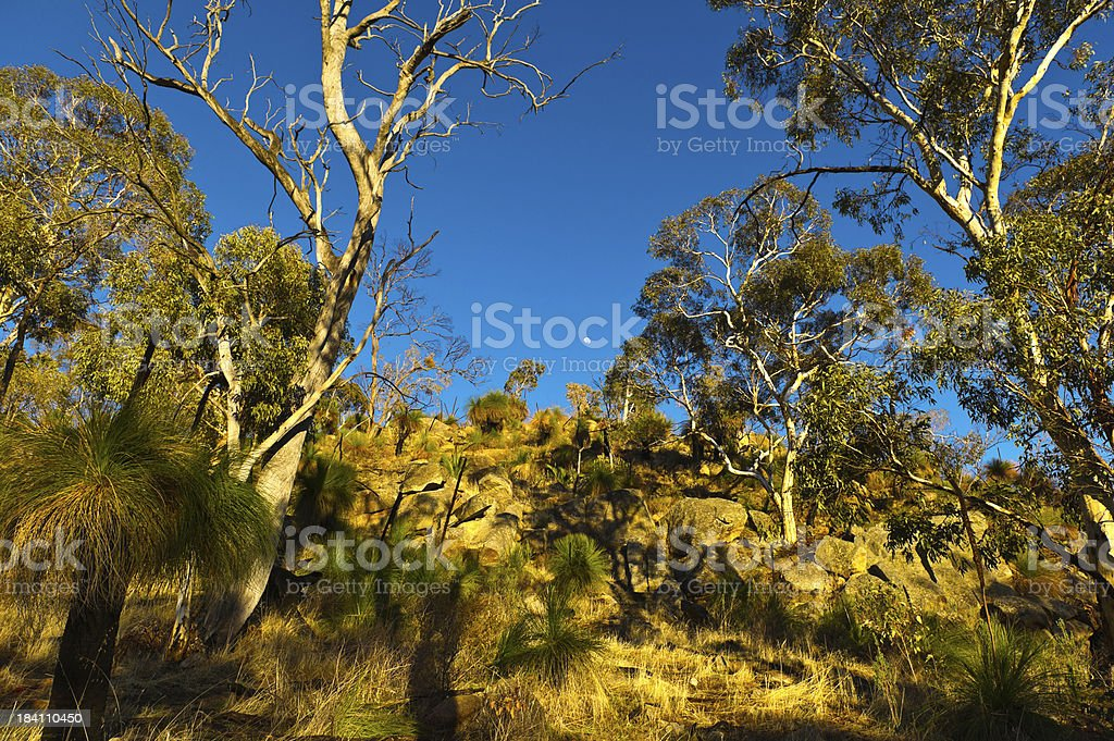 Tree and  Rocks in Perth Hills royalty-free stock photo