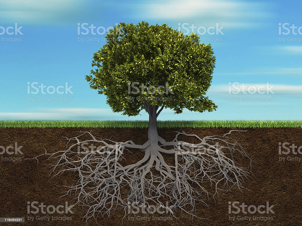 Tree and root stock photo