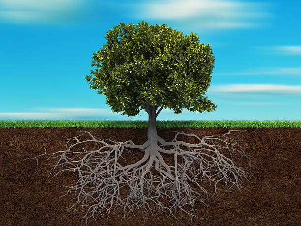 tree and root - tree roots stock pictures, royalty-free photos & images