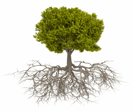 Tree and root